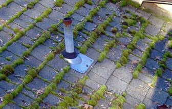 Roof Moss.